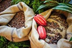 Какао бобы, Ecuador ASS