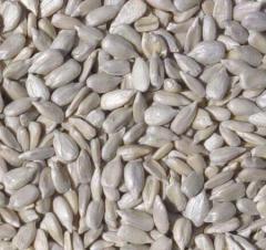 Kernel of seeds of sunflower crude