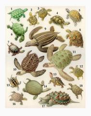 черепахи, корма для рептилий, зофобус, мучной