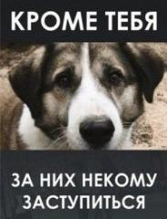 Поможем вместе нашим животным