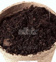 Biohumus. What fertilizer