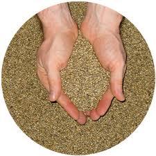 Продам насіння люцерни, Насіння люцерни, Люцерна, Купити насіння люцерни.