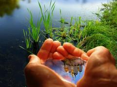 BIOGUMUS-ekologicheski safe organic fertilizer