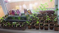 The live earth for cultivation of seedling