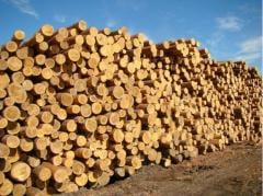 The firm realizes the breed wood: pine, oak,