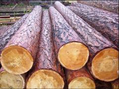 Round timber nekorovanny coniferous breeds