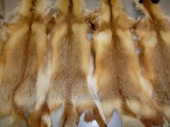 Skin of fox