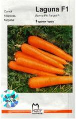Carrots seeds
