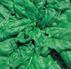 Long Stending's spinach 500gr