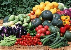 The packaged seeds of vegetable cultures