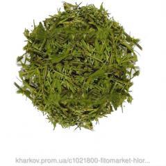 Грыжник гладкий (Herniaria glabra, smooth