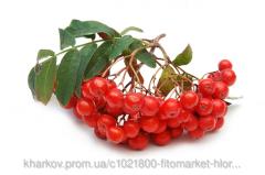 Рябины обыкновенной плоды 100 грамм (Sorbus
