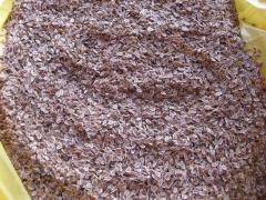 "Fennel seeds ""Ambrosia"","