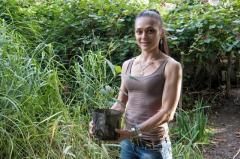 Каштан сьедобный - Сладкий каштан (Castonea Sativa