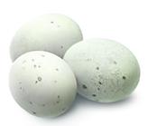 Eggs duck incubatory breeds Grey Ukrainian