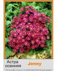 Aster sectional Jenny