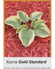 Khosta Gold Standard