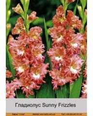 Sunny Frizzles gladiolus