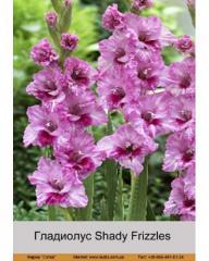 Shady Frizzles gladiolus