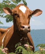 Telki breeding of the Ukrainian farms, from