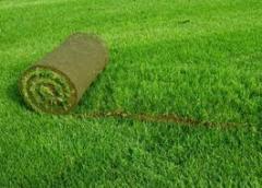Sports lawn rolled Chernivtsi
