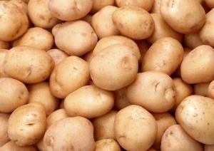 Картофель. Купить картофель. Купить картофель от