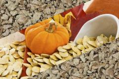 Makukh pumpkin