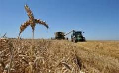 Выращивание зерновых и технических культур