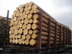 I will sell a sawlog the Pine 1,2,3 grade 4-6m.