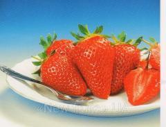 Saplings, Strawberry, grade Albion
