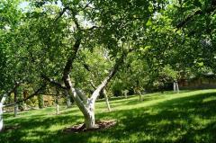 Сад. Обрезка кустов, деревьев.