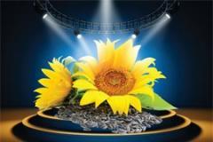 Seeds of sunflower of ARENA_PR / ARENA_PR