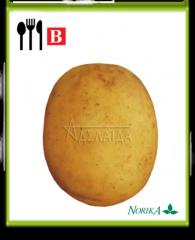 Лучшие сорта высокоурожайного картофеля.