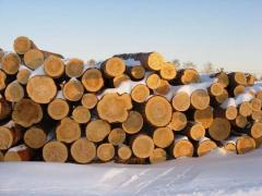 Лес круглый - ольха, осина, дуб, липа, клен