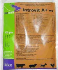 Витаминно-минеральный комплекс Интровит А+ВП