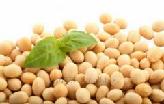 Soy seeds