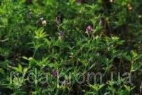 Lucerne seeds