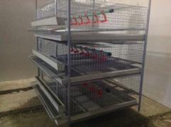 Cage for quails