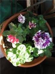 Plants other garden, ornamental plants for