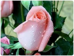 Цветы живые в большом ассортименте продажа, опт