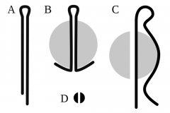 The forelock of 6,3 mm diameter, in assortment