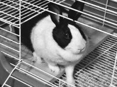 Оборудование для кроликоферм