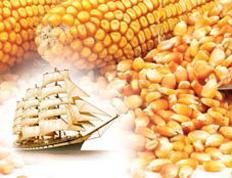 Семена кукурузы СИ Канзас