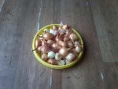 Seminte de ceapa