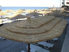 Beach canopies and umbrellas from a cane