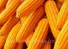 Кукуруза Пионер ПР37Ф73 (Pioneer PR37F73) - посевной материал