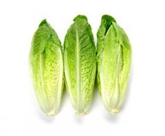 Romaine for export I will sell salad