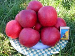 Саженцы яблони  (Фуджи кику 8, Хоней Крисп, Голден