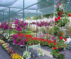 Flowers lavender
