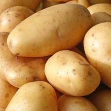 Молодой картофель сорт Ривьера